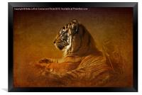 Dont Wake a Sleeping Tiger, Framed Print