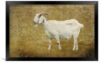 Billy Goat Gruff, Framed Print