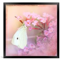 Butterfly Bliss, Framed Print
