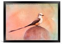 Scissor-tailed Flycatcher, Framed Print