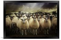 Sheepfest, Framed Print