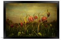 Fritillaries 2013, Framed Print