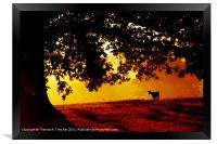 Pygmy Goat in Morning Light, Framed Print