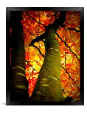 FALL COLORS, Framed Print
