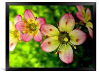 natures color, Framed Print