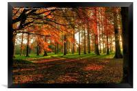 Autumn Woodland Walk, Framed Print