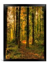 Autumn Woodland Walk, Framed Print