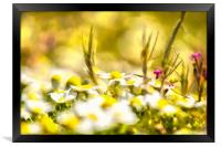 Sunny Blooming Day, Framed Print