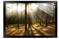 Sunbeams through the trees, Framed Print