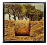 Hay Roll, Framed Print