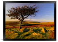 Hawthorn Tree,Two Moors Way, Framed Print