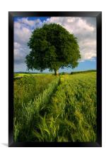 Barley Field & Oak Tree,Somerset, Framed Print