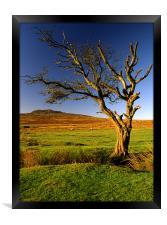 Dead Tree on Dartmoor, Framed Print