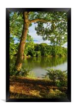 Chard Reservoir Summer Reflections, Framed Print