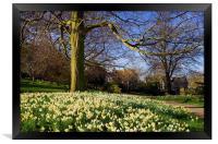 Sheffield Botanical Gardens in Spring, Framed Print