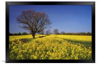 Rapeseed field & Tree, Derbyshire, Framed Print