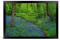 Wooley Wood Bluebells 2, Framed Print