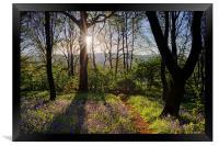 Bluebell Sunrise, Framed Print