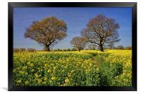 Rapeseed field & Trees, Derbyshire, Framed Print
