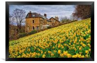 Field of Daffodils, Framed Print