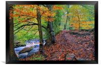 Rivelin Woodland Walk, Framed Print