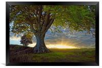 Sunset under the Beech                           , Framed Print