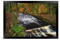 Rivelin in Autumn                                 , Framed Print