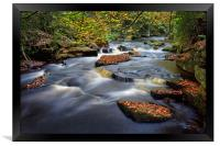 Rivelin Autumn Colours                            , Framed Print