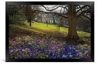 Springtime in Endcliffe Park                      , Framed Print