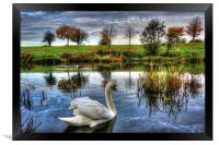Lonely swan, Framed Print