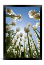 Tulips, Framed Print