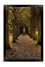 Autumn Avenue, Framed Print