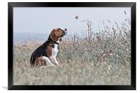 The Beagle, Framed Print