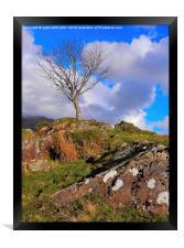 RHYD DDU LONE TREE, Framed Print