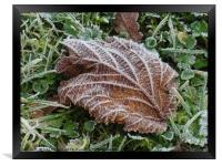 Frost on a Brown Leaf                        , Framed Print