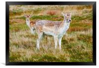 Deer in the Grass, Framed Print