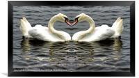Mute Swan Heart, Framed Print
