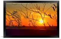 Sunset through the bushes, Framed Print