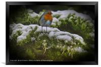 Winter Robin, Framed Print