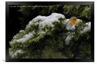 Robin in the winter, Framed Print
