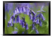 Bluebell Arch, Framed Print