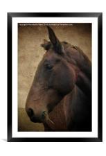 Horse Portrait, Framed Mounted Print