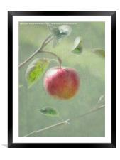 Apple of my Eye., Framed Mounted Print