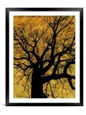 Oak tree in yellow., Framed Mounted Print