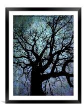 Oak Tree in Blue, Framed Mounted Print