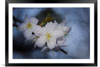 Springtime Blossom., Framed Mounted Print