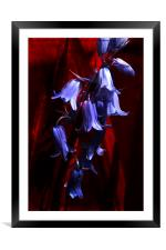 Bluebells on Red, Framed Mounted Print