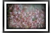 Ditsy Spring Flowers., Framed Mounted Print