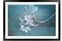 Apple Blossom Blues., Framed Mounted Print