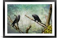 Jackdaw Love, Framed Mounted Print